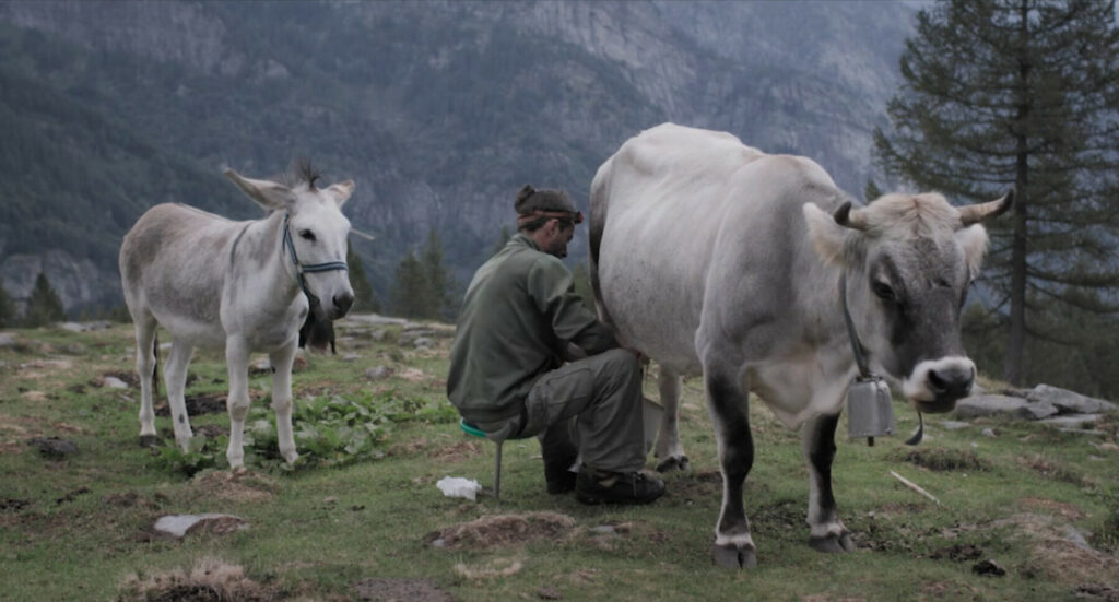 Al Trento Film Festival… Anche Stanotte le Mucche Danzeranno sul Tetto!